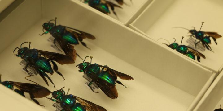 Tartu ülikooli loodusmuuseumi keldrites leidub haruldusi