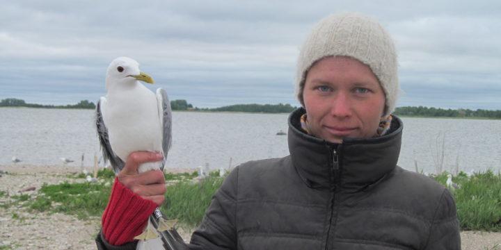 Teaduse köögipoolelt: minu linnud