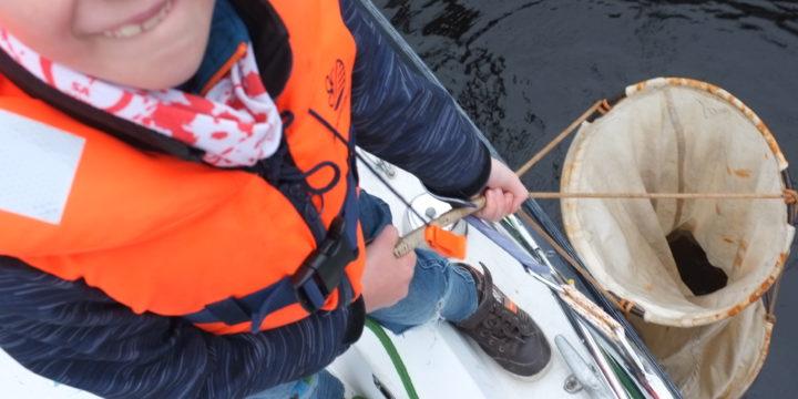 Planktonijaht: uus perekondlik ajaveetmise viis