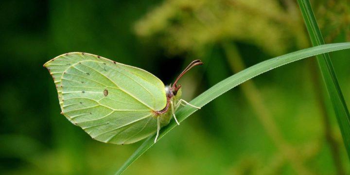 Putukate kadumine maailmast – kas paanikaks on põhjust?
