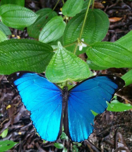sinine värv