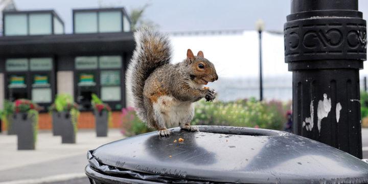 Kas linn võib põhjustada metsikutel loomadel vähki?