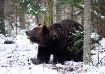 Eesti karude taastumine sajanditagusest madalseisust kestab endiselt