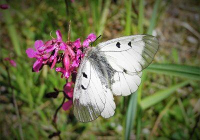 Vastu muutustele – mida teevad liblikad homme?
